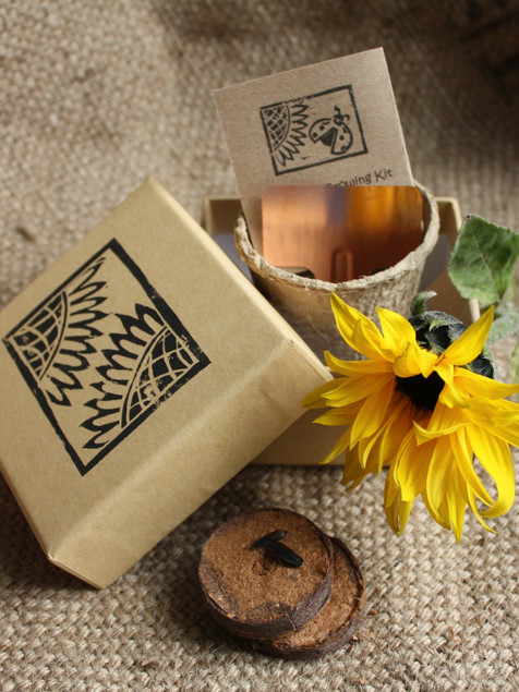 Sunflower growing kit