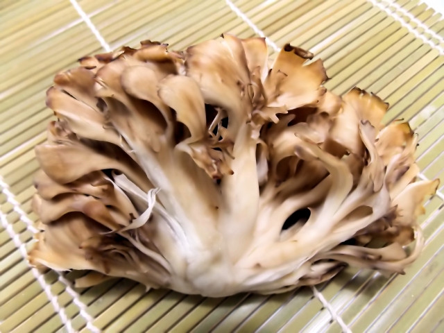 Maitake - Intensely Nutritious Mushrooms