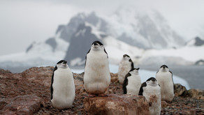 A Voyage into the Frozen Wilderness - marine conservation in the Antarctic