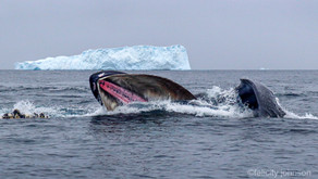 Poo-nami: How Whale Poo Can Combat Climate Change