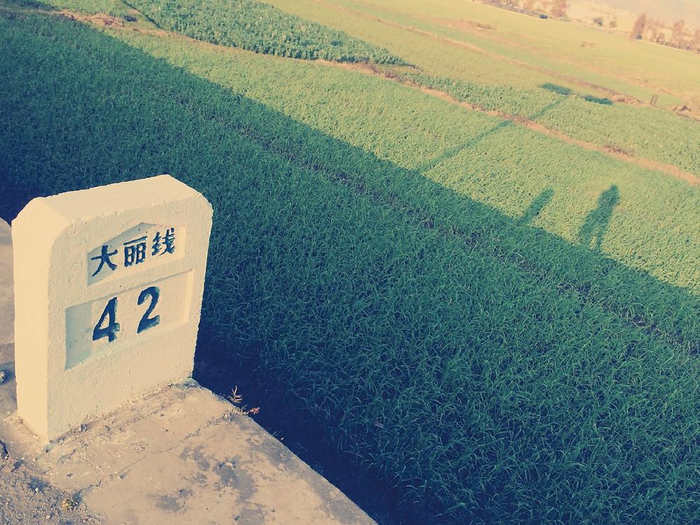 dali-04.jpg