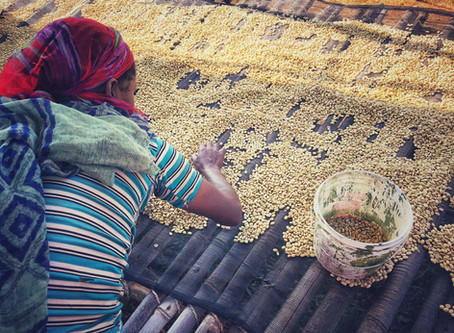 產區為界?還是風味為憑? 埃賽俄比亞咖啡的傳說與現實