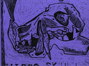 Hippo Skull