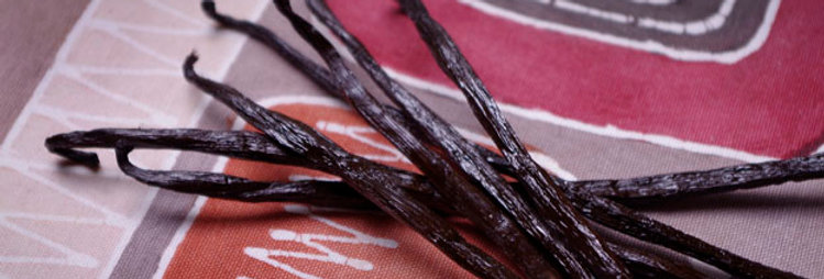 Vanilla Beans, Wholesale