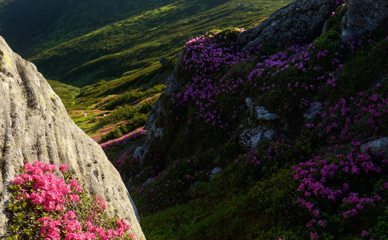 Carpathians24.jpg