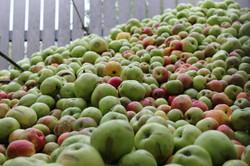 Äpfel Obstbrand