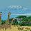 Thumbnail: Kilamanjaro Giraffe Blackhawk