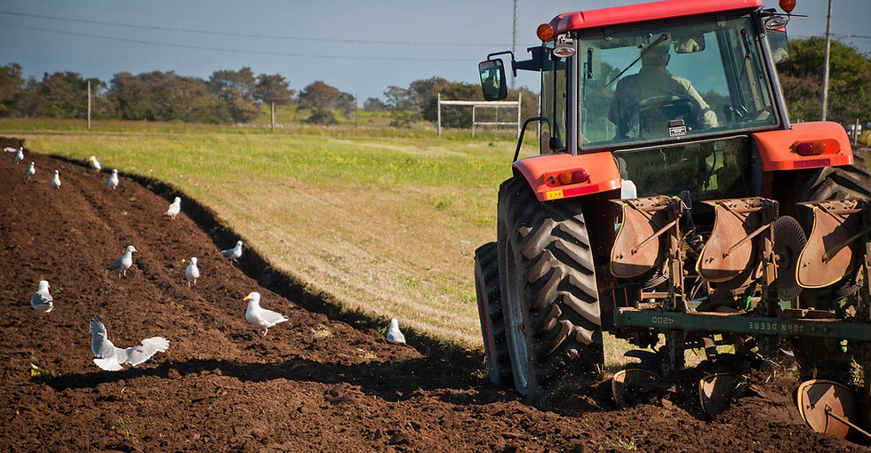 Tractor-With-Gulls-1378x717 (3).jpg
