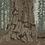 Thumbnail: Sequoia General Sherman Rushmore
