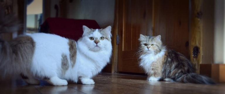 Josie and Claude.jpg
