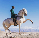 Maroc-chevaux-balade-equestre-maghreb-ma
