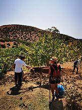 Escapade bio à Brachoua dans  la campagne environnante de Rabat