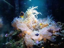 Procurando Nemo - Foto: Matheus Cardoso