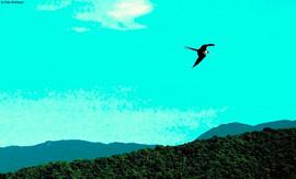 Liberdade - Foto: Genilda Gomes