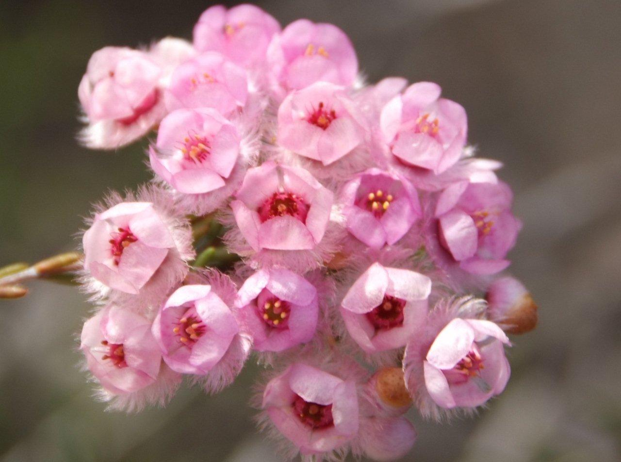 wildflowers 019