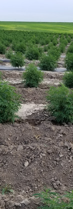 Plant spacing is important, but dont for