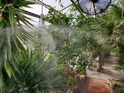 tropicalmisting