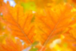 Orange Season.jpg