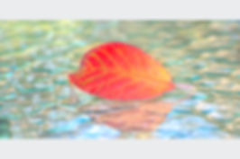 Swimming Leaf.jpg