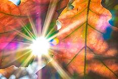 power leafs.jpg