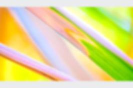 Colour Reed II.jpg