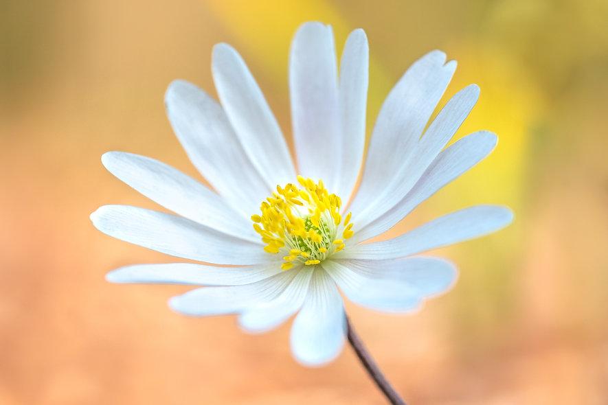bella fleur.jpg