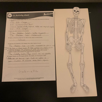 """STEM Project - """"Build a Skeleton"""""""