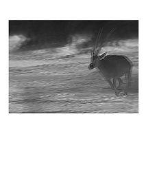 Thermograma# 02 C-print_25x30cm.jpg