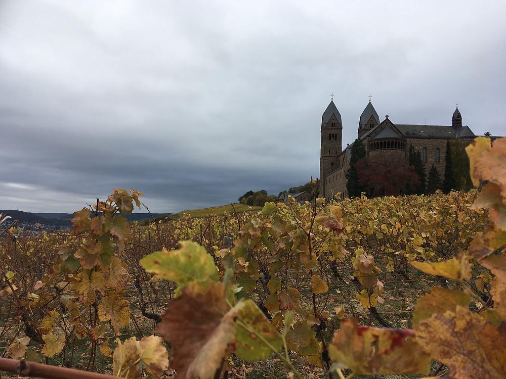 Abeti St. Hildegard in the stunningly golden vineyard, Rüdesheim