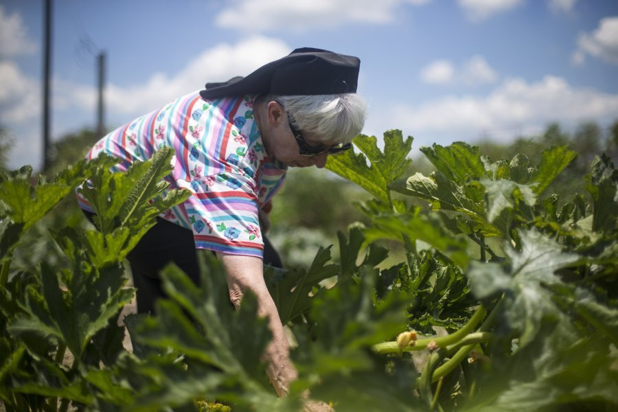 In 2015, inspired by how her dying brother felt better eating organic food, Sr. Elizabeth Smith opened an organic, self-sustaining soup kitchen in Kingsville, TX. The soup kitchen gets its vegetables from the community organic garden that Sr. Elizabeth created at the same time.