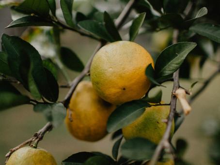 By Their Fruits   Por sus frutos