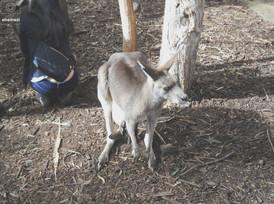 Australia - Just another kangaroo