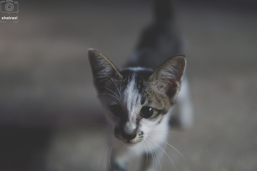 Indonesia - A Kitten In The Streets
