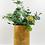 Thumbnail: Nova Face Vase 22cm (Mustard)