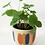 Thumbnail: Strya Planter Retro Small 13cm