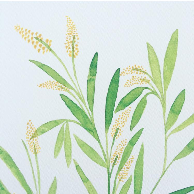 Grow Healthy - Wattle Print