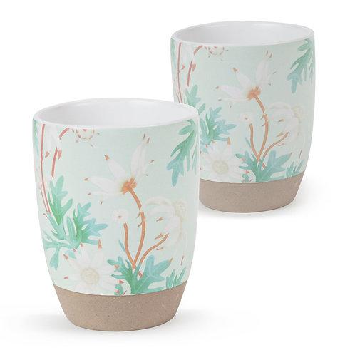 2pk Latte Flannel Flower - Robert Gordon