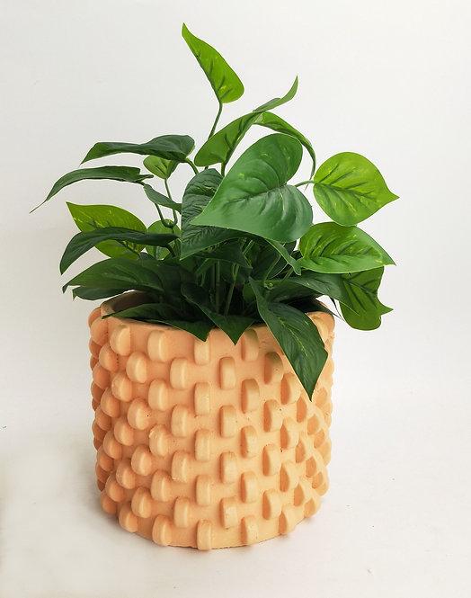 Dakota Planter Sherbet Small
