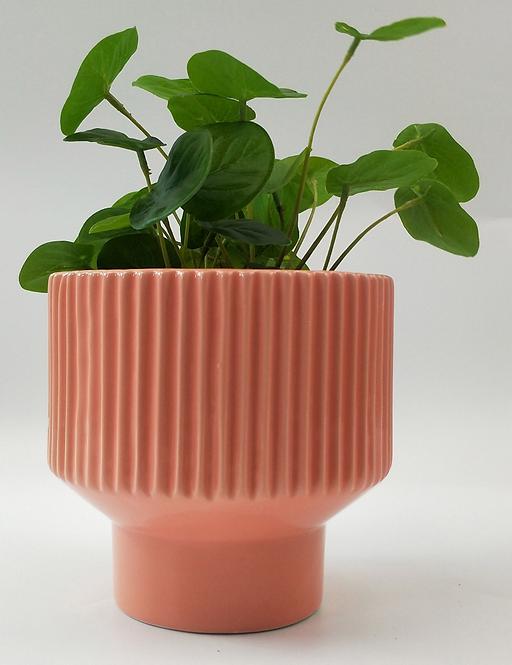 Nova Planter 14cm Pot (Pink)