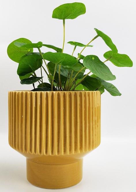 Nova Planter 14cm Pot (Mustard)