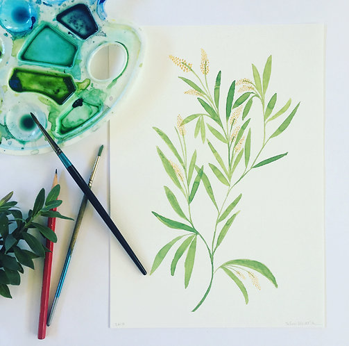 Wattle - Grow Healthy PRINT