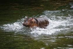 'ZooParc de Beauval'