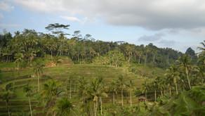 Meine Reise nach Indonesien - ein Wechselbad der Gefühle