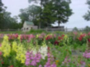 plpaca and flowers 7 04.jpg