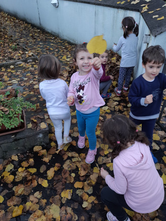 Meravigliose foglie