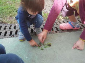 Alla scoperta del giardino...e non solo!