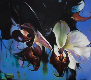 Orkidoo