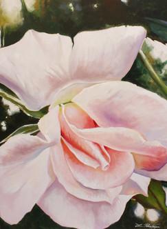 Rose Rose Clair