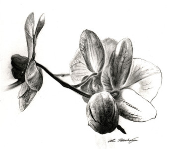 Orchids in Black