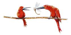 rode vogels